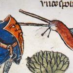 1# Įdomieji viduramžiai. Kodėl viduramžių knygose riteriai dažnai buvo vaizduojami besikaunantys su sraigėmis?